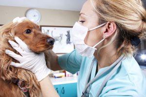 Поздравления с днем рождения для ветеринара