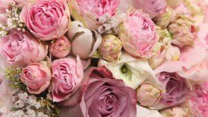 Как выбирать цветы?