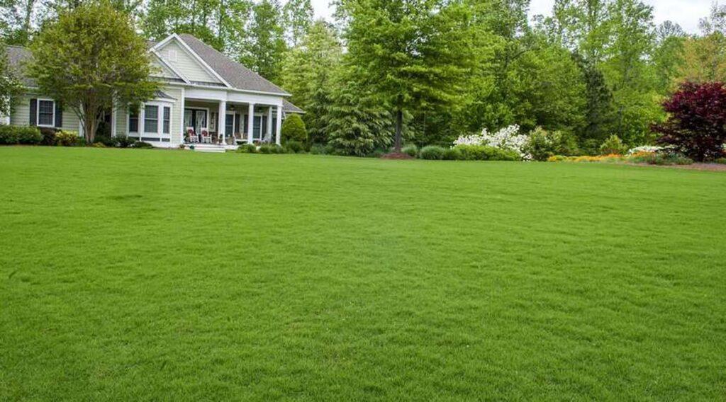 Натуральная газонная трава: особенности и преимущества